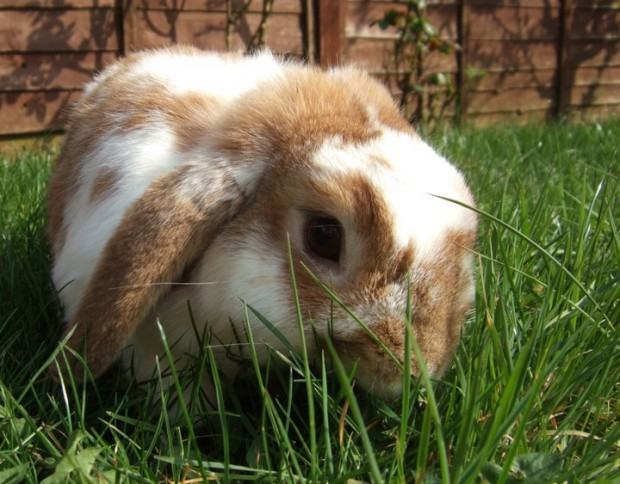 my bunnies have hay fever gt splodz blogz