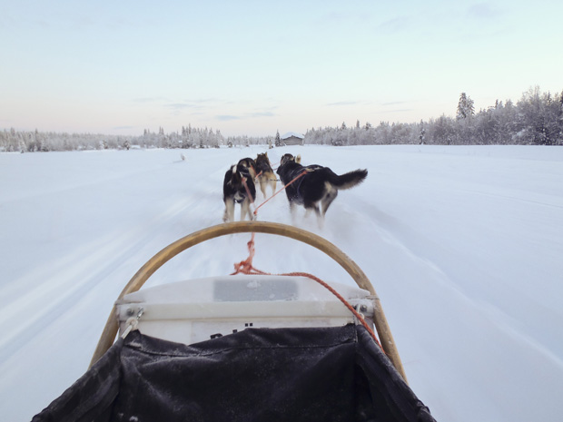 Our husky team pulling us along the snow