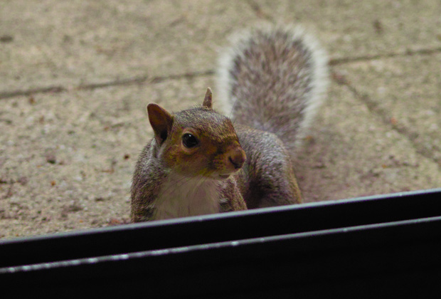 Squirrel by the Patio Door 2010