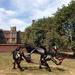 26 July - Rhino at Doddington Hall