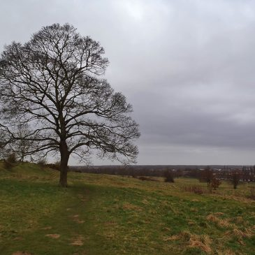 Exploring Nature's Spaces in Lincoln