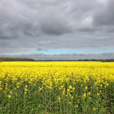 Views from Lincolnshire, and Some Facts