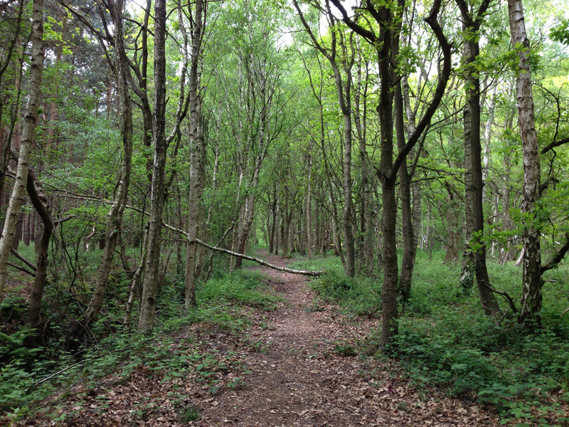 Walking in Lincolnshire - Woodland