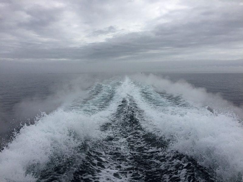 Whale Watching - Ghostek Atmoic Waterproof iPhone Case Review