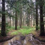 Woodland in the New Forest, Splodz Blogz