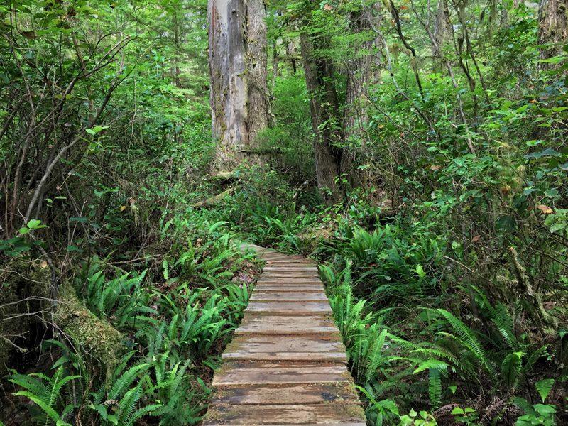Splodz Blogz Zartusacan, Vancouver Island, Rainforest Trail