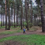 Splodz Blogz   Gruffalo Trail Sherwood Pines