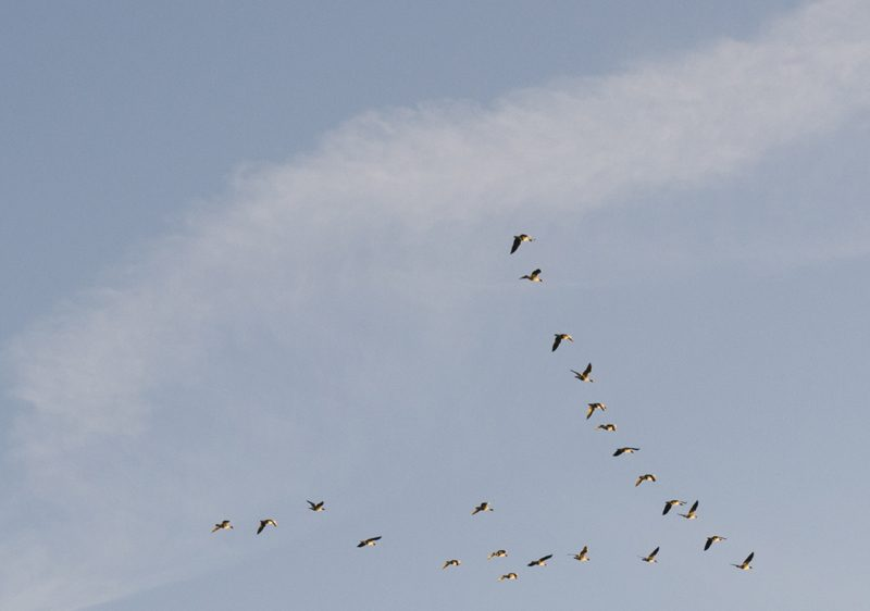 Splodz Blogz | Bird Spotting in the UK | Birds in Flight