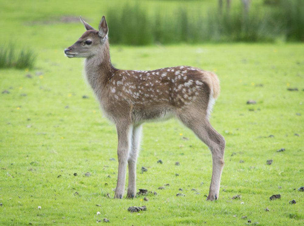 Splodz Blogz | NC500 | Red Deer